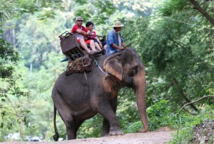 Tourists riding elephant in Thailand