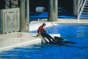 California become first US State to ban SeaWorld Orca shows