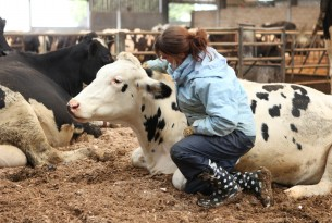 The cow's positive responses are recorded while the contact element is carried our by World Animal Protection's Helen Proctor.