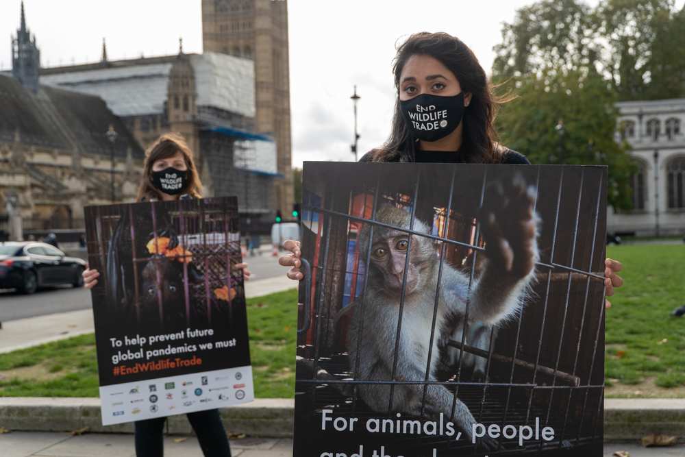 We are calling for a global ban on the wildlife trade.