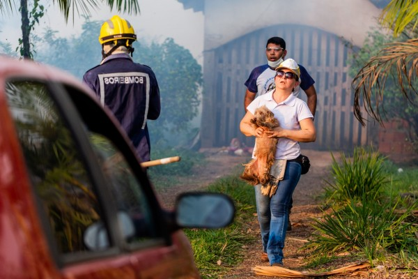 We're on the ground to help animals affected by Amazon wildfires