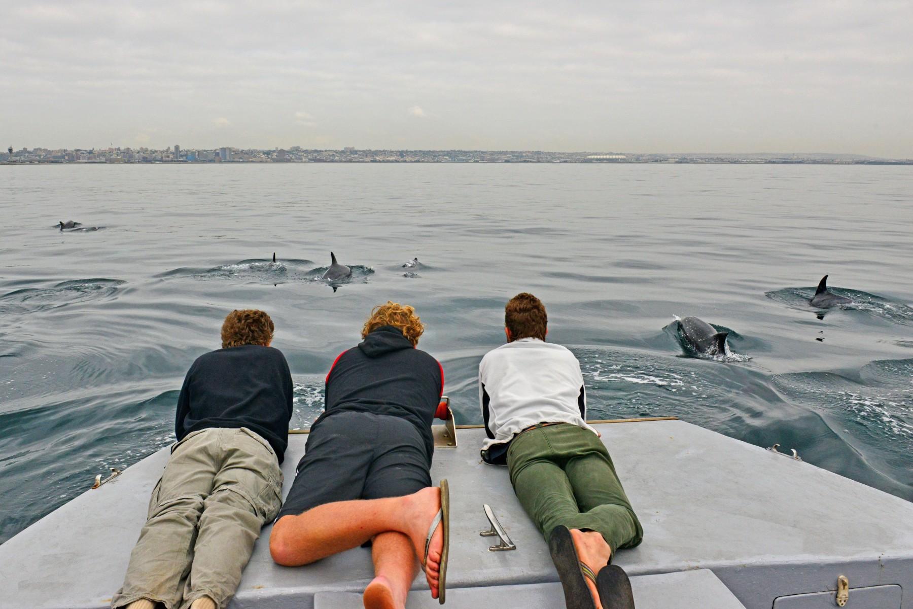 Algoa Bay i Sydafrika er udnævnt til Whale Heritage Site