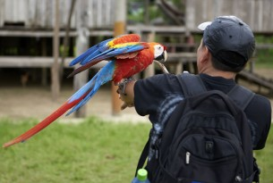 A tourist holds a bird in the Amazon - World Animal Protection - Wildlife. Not entertainers