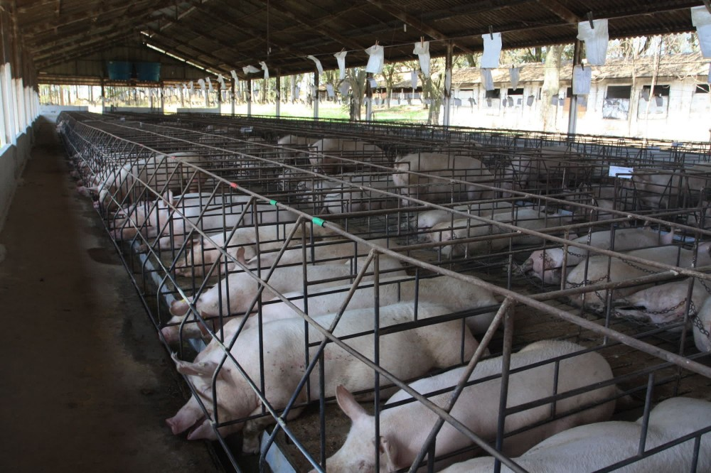 Animals Kept In Cages