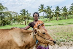 Making it simple – protecting animals from disasters in Tamil Nadu, India