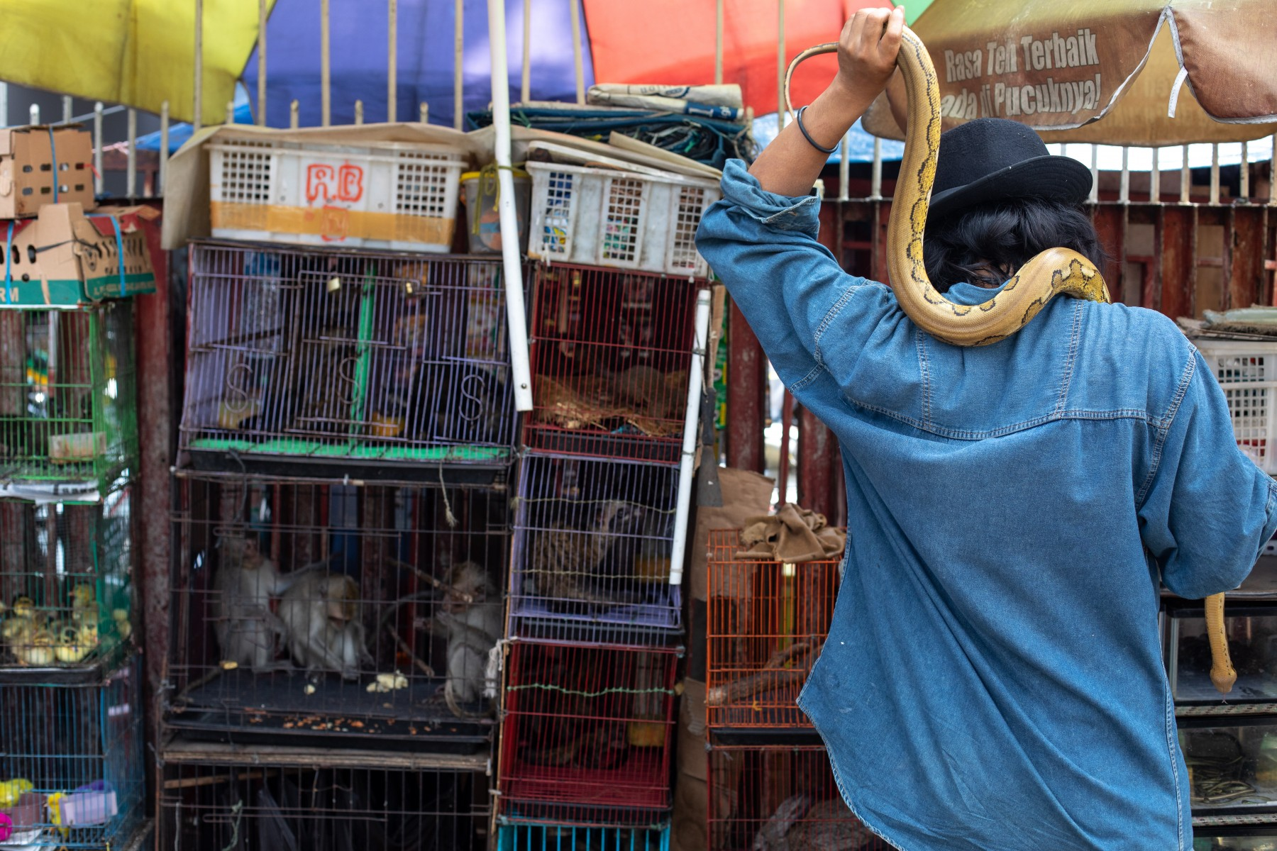 A snake on a vendors shoulder, and cages of animals at a market in Jakarta, Indonesia. Credit Line: World Animal Protection / Aaron Gekoski