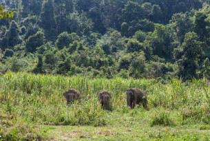 Three female elephants at BLES sanctuary in Thailand - World Animal Protection