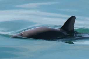All hands on deck to save the vaquitas | World Animal Protection Australia