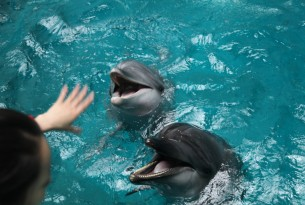 Hand reaching out to dolphins in captivity - World Animal Protection - Wildlife. Not entertainers