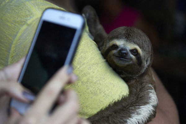 Local sloths are taken from the wild and used for harmful selfies with tourists, in Manaus, Brazil.
