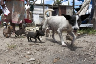 A mother with her young puppies who have survived the cyclone