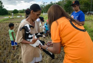A World Animal Protection team member provide rapid emergency veterinary care to a goat after Tyhpoon Haima struck