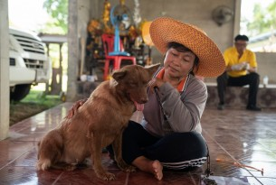 Dogs in Sisaket, Thailand