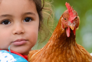 Girl holding chicken in Argentina