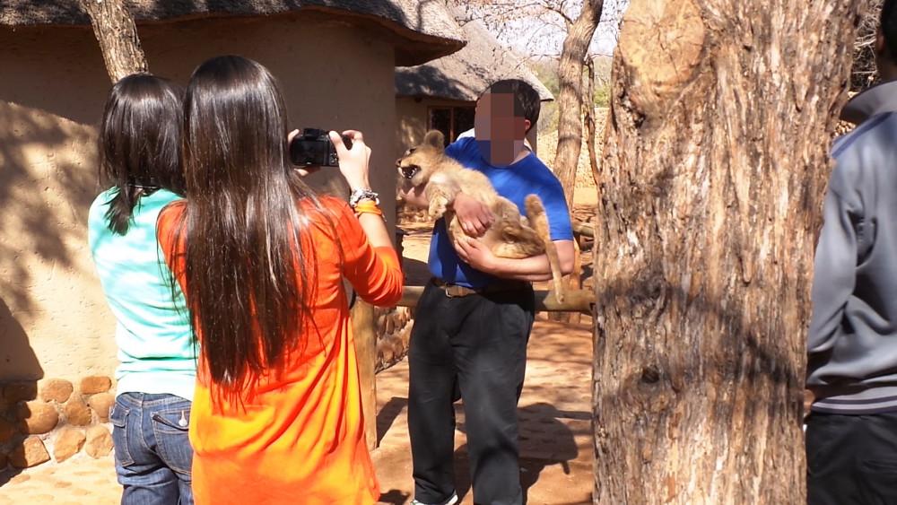 Turista segurando filhote de leão no colo enquanto duas mulheres registram o momento