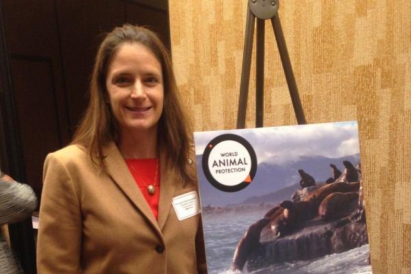 World Animal Protection's U.S. Campaign Manager for Oceans & Wildlife Elizabeth Hogan