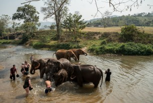 Tourists bathing elephants at venue in Thailand - World Animal Protection