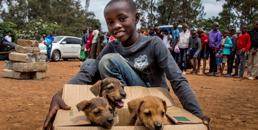 Boy with dogs in Kenya