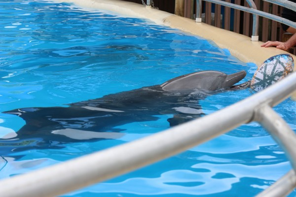Landmark sea sanctuary study for captive dolphins announced