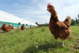 The first animal welfare-focused organization to join The Sustainability Consortium