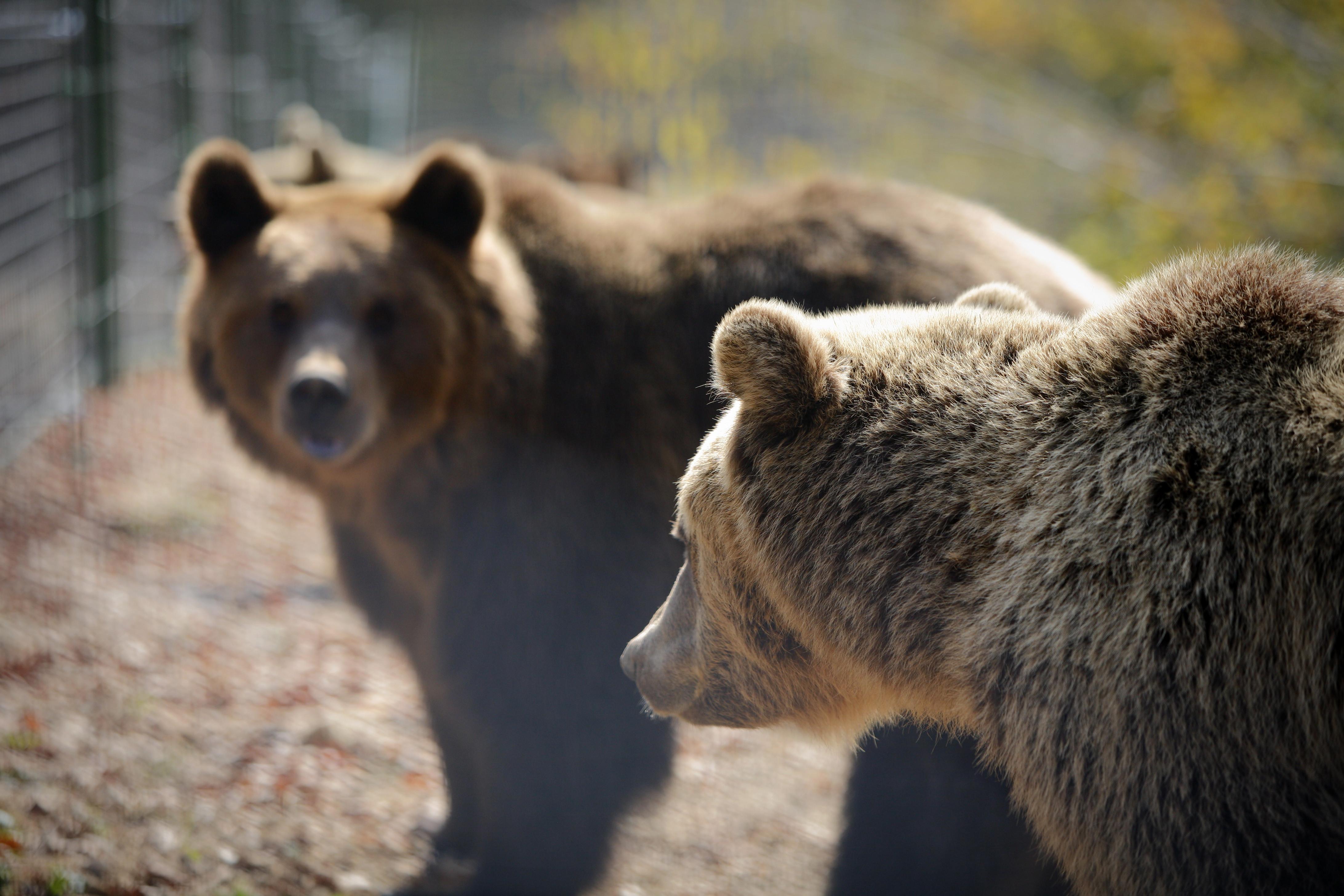 Ending bear baiting