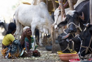 Women watching over their cows at a cattle camps in Beed district, Maharashtra, India (Simon de Trey-White)