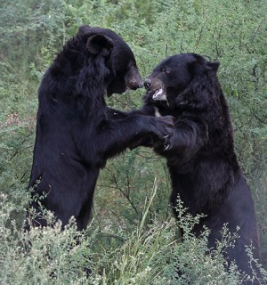 World Animal Protection - Bear Sanctuaries - Rescued Wildlife