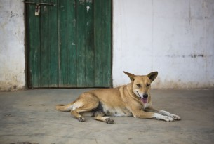 Zero human deaths from rabies must mean zero dog deaths too