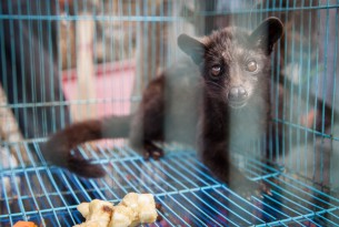 WHO has taken a step to halt the sale of live wild animals in food markets