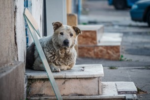 Dogs on steps in Romania