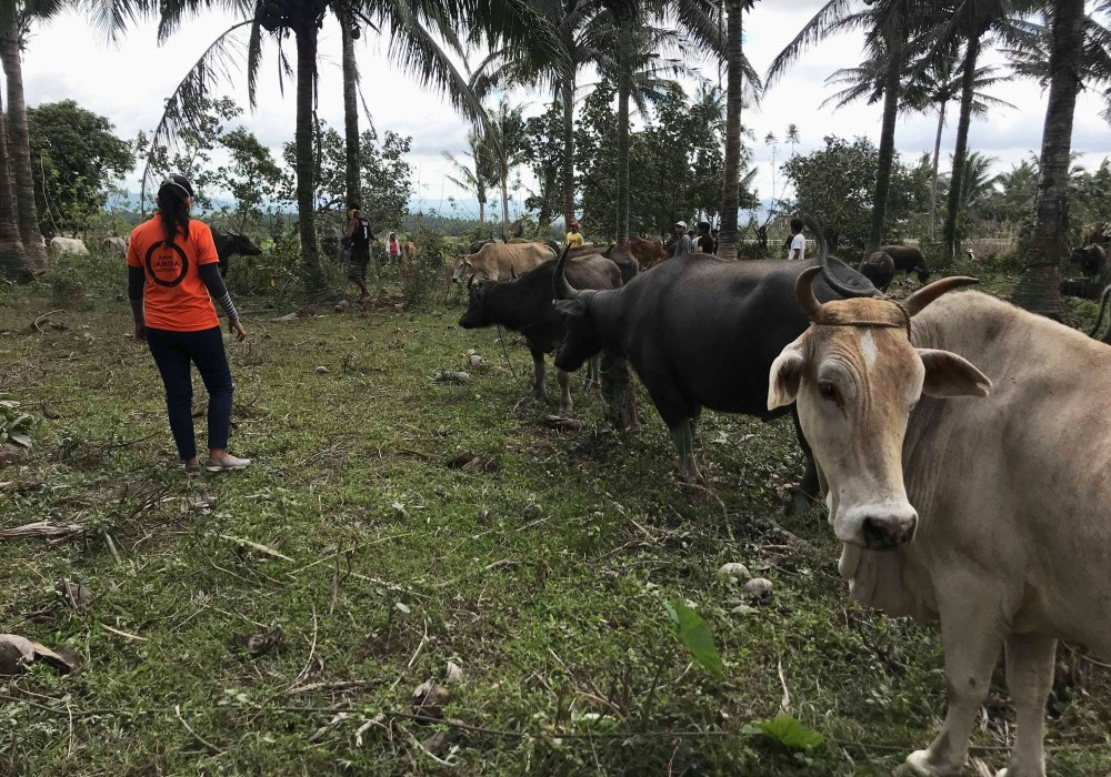 World Animal Protection Disaster Liaison Officer Dr. May Christine Espiritus visits the disaster area to treat animals affected by the sudden eruption, and identify other possible emergency needs