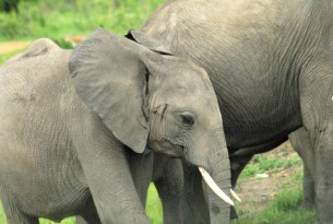 Elephant-friendly tour operators announced in the Netherlands