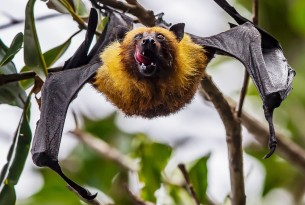 A bat hanging upside down from a tree