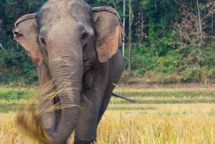Foto: Kindred Spirit Elephant Sanctuary