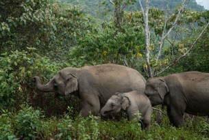 A family of elephants in the wild