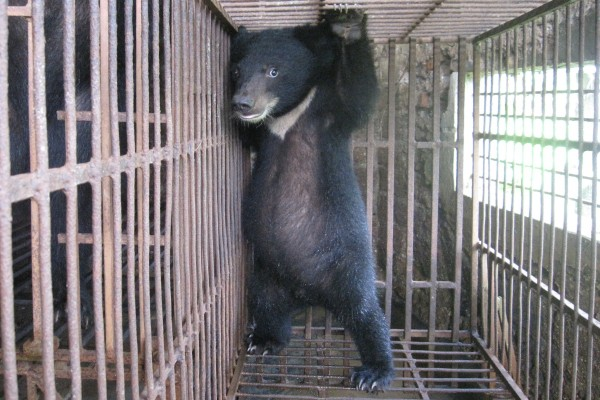 Small bear in a cage