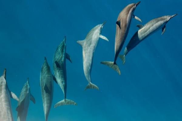 Dolphins in the wild - World Animal Protection