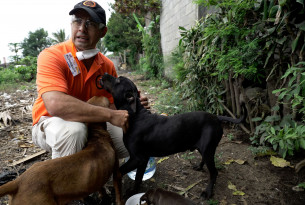 Guatemala volcano update: meet the animals we're helping