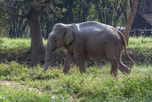 We're working with local venues to make tourism in Thailand more elephant-friendly