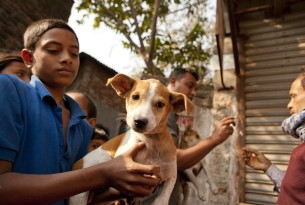 A dog being held by a young person. Credit Line: WSPA/Mahmud