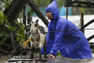 Helping animals after twin typhoons strike northern Philippines