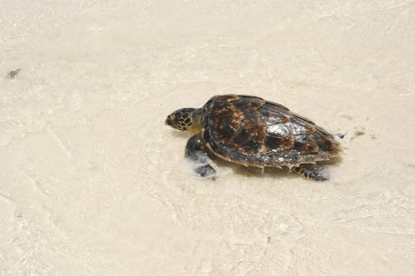 Stop sea turtle farming and abuse