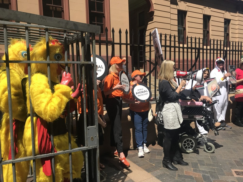 Protest outside Parliament in Sydney to call for a ban in battery cages