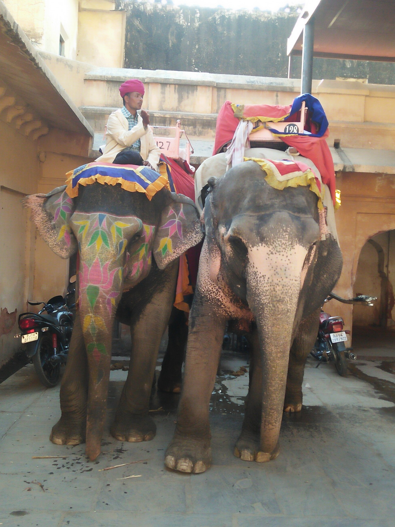 Elephants in Amer fort stable in Jaipur Shubhobroto Ghosh