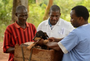 59 year old Saidi Isanzu brings his dogs to be vaccinated against rabies.