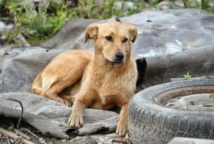 dogs, covid19, coronavirus, stray animals