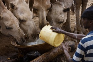 Helping animals after frought in Mwingi, Kenya - World Animal Protection - Animals in disasters