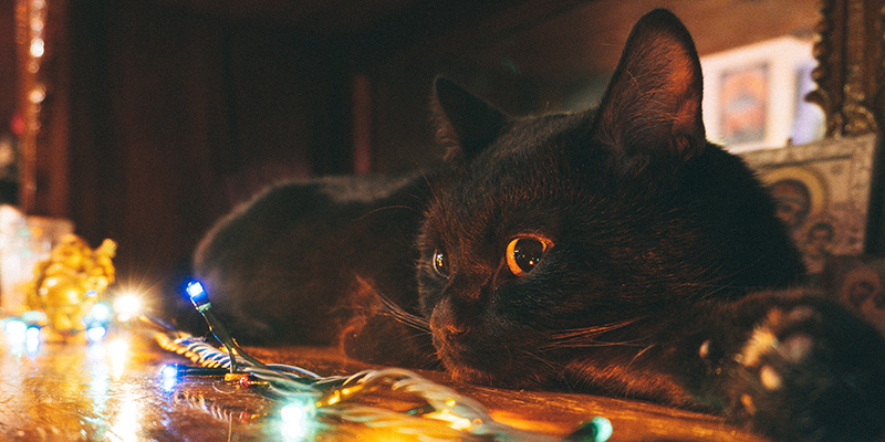 A black cat staring at some Christmas lights