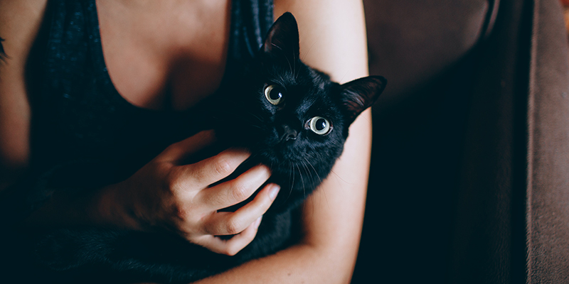 A black cat enjoying a cuddle in the arms of a white woman wearing a grey tank top