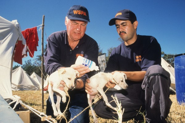 Our disaster relief team provides animal aid after an earthquake in El Salvador, 2001